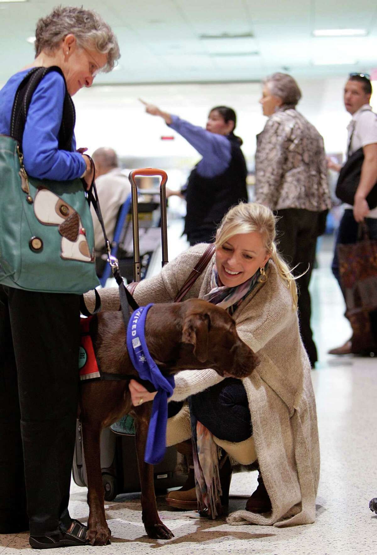 Jaci Smith pets 'Simond', a chocolate labrador, as part of United Airlines offering passengers comfort and holiday cheer with therapy dogs at Bush Intercontinental Airport on Monday, Dec. 22, 2014, in Houston.