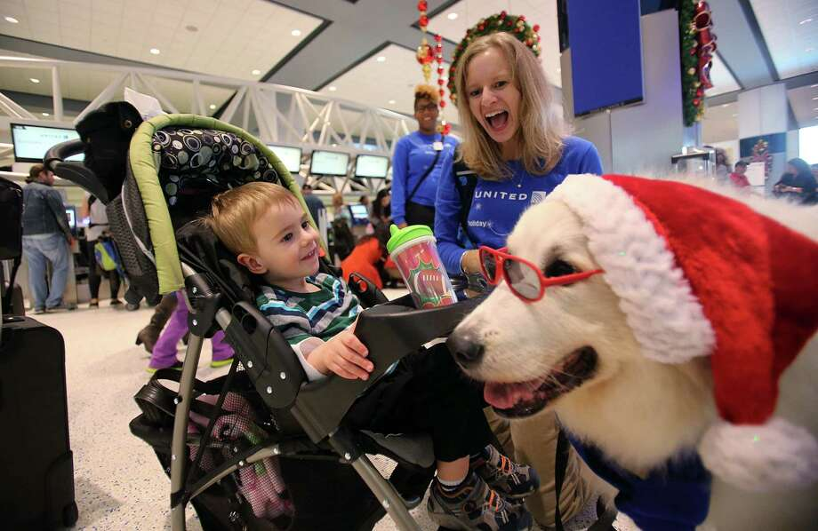 "Jacob Shelton, 2, smiles at ""Denali"", a Great Pyrenees, and owner Christy Almond who wears his glasses as United Airlines offers holiday cheer for passengers at Terminal C by inviting therapy dogs to comfort passengers traveling through Houston George Bush Intercontinental Airport (IAH) on Monday, Dec. 22, 2014, in Houston. Photo: Mayra Beltran, Houston Chronicle / © 2014 Houston Chronicle"