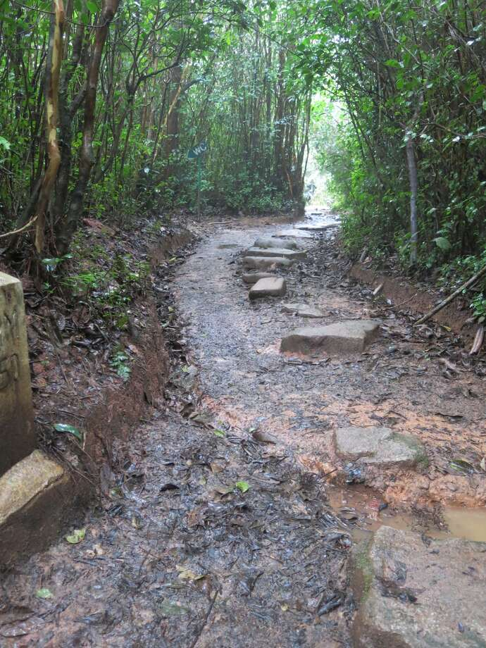 This long, narrow trail in Ranomafana National Park takes visitors into a rain forest where several species of lemurs live, including the Golden bamboo lemur. Photo: By ANNE GUILLEN, SPECIAL TO SEATTLEPI.COM