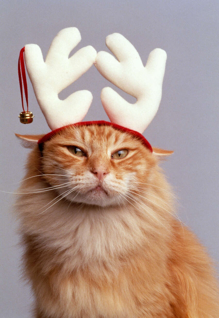 The only thing worse than a Santa suit is those blasted antlers.