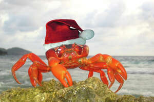 The island that's always crabby at Christmas - Photo