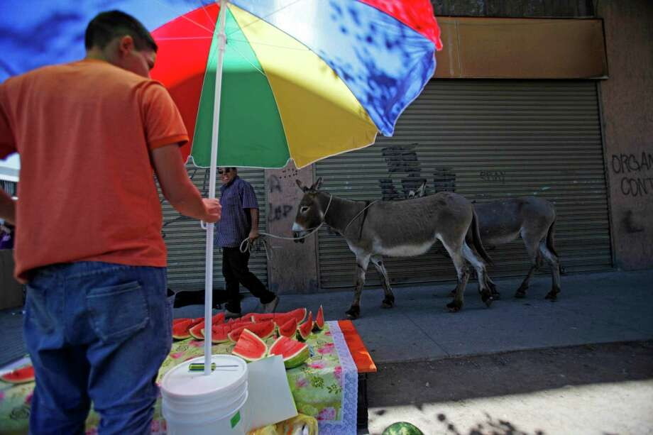 Ricardo Alegria, top, walks his donkeys past a watermelon stand in Santiago, Chile, as he sells fresh donkey milk; Alegria, left, holds his donkeys by a leash, and a toddler, right, receives fresh donkey milk from his mother. Alegria says the milk is a vitamin jolt for babies with gastric problems, and some researchers say it can be a good substitute for children with allergies to cow's milk. Photo: Luis Hidalgo / Associated Press / AP