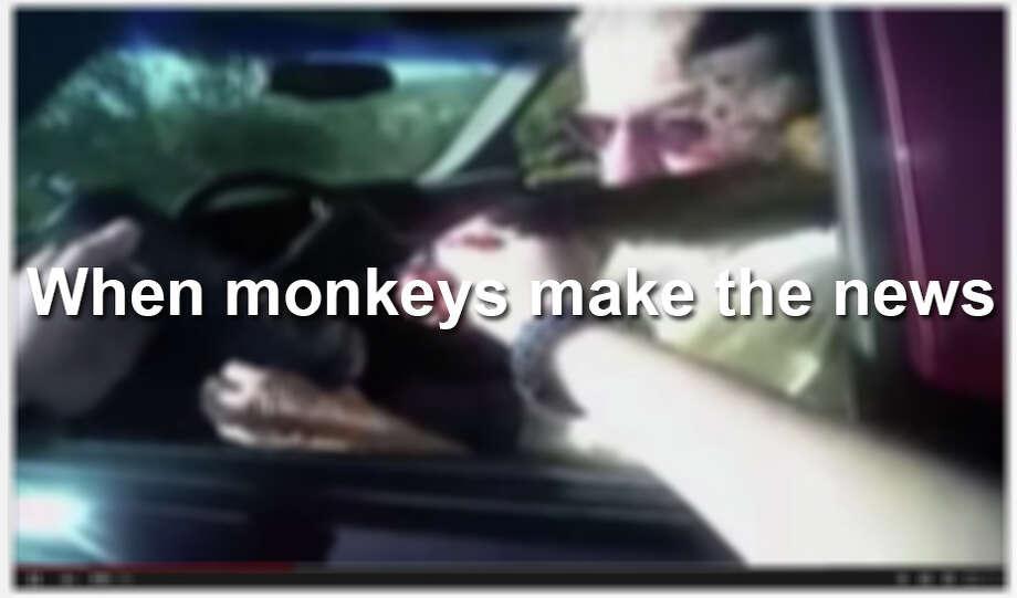 Monkey make headlines around the world. Photo: San Antonio Express-News