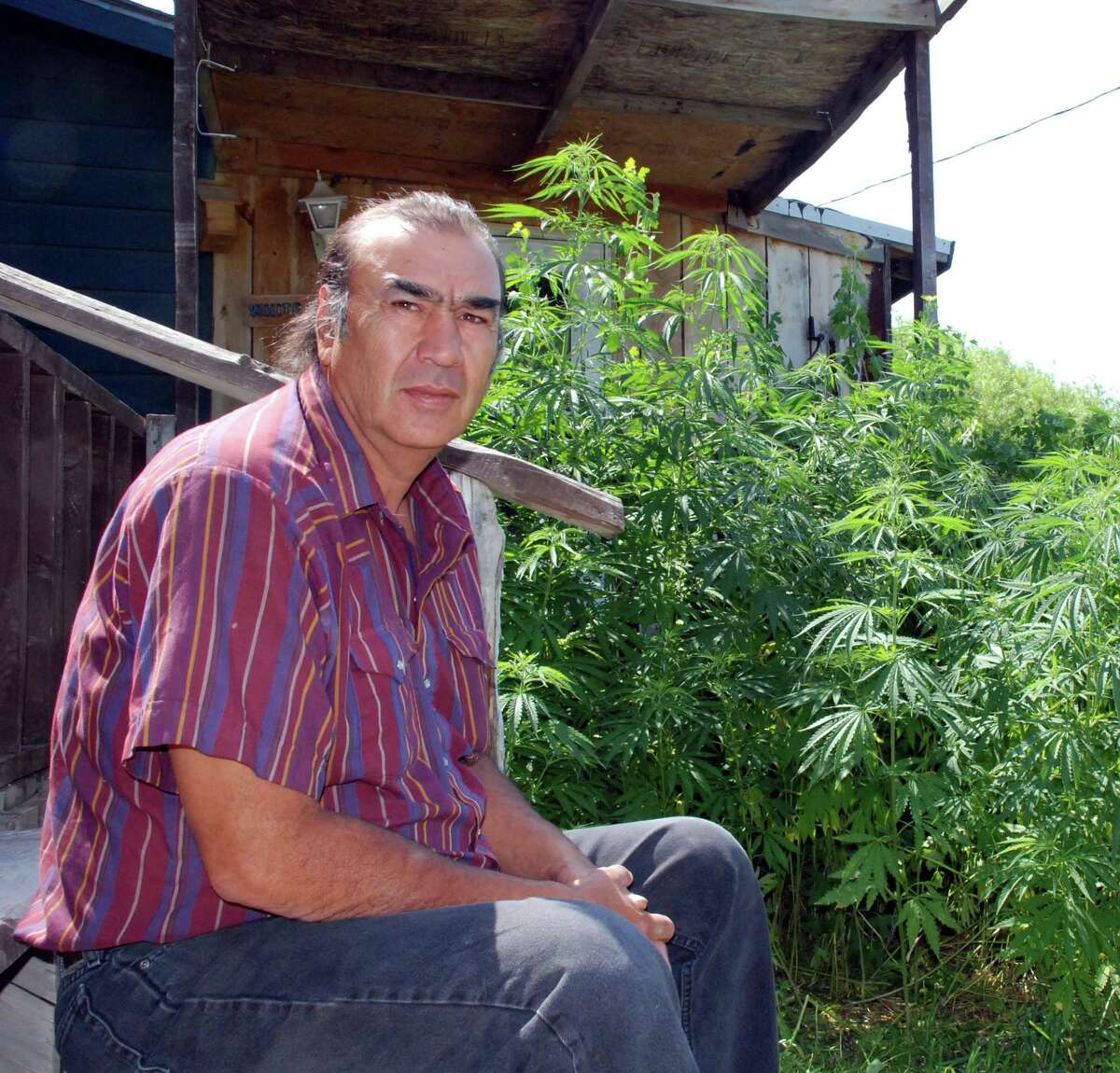 Alex White Plume at home in Manderson, S.D., with hemp plants that grew from DEA-raid seeds.sits on the back steps of his house near Manderson, S.D., on Tuesday, June 26, 2007, near some hemp plants that grew from seeds knocked off plants confiscated by federal drug agents. White Plume sought to grow hemp, a cousin of marijuana with only a trace of marijuana's drug, on his ranch on the Pine Ridge Indian Reservation. (AP Photo/Chet Brokaw)