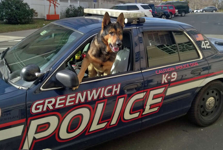 Tyro, one half of the Greenwich Police Department's K-9 Team for the past seven years, is retiring effective Dec. 31. He and partner Officer Michael Macchia have been named recipients of the department's Officer of the Month award for December. Photo: Contributed Photo / Greenwich Time Contributed