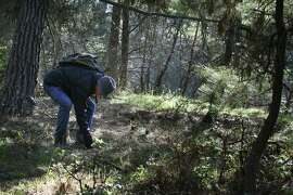 David Rust, president of the North American Mycological Association, looks for mushrooms at Joaquin Miller Park in Oakland.