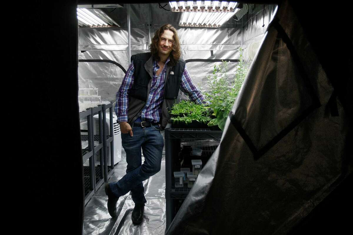 Austen Heinz, CEO of Cambrian Genomics, grows genetically engineered plants at a San Franciscco greenhouse. Cambrian delivers DNA dequences to pharmaceutical companies.