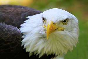 This closeup of an American bald eagle by Lori Bolle is part of a three-photographer exhibit opening at the Kershner Gallery in the Fairfield Public Library's main branch. An artist's reception is planned Saturday, Jan. 10.