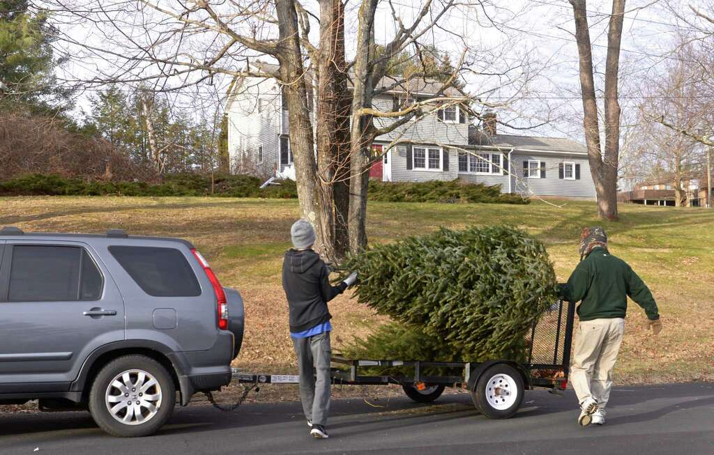 Brookfield Boy Scouts collect trees around town - NewsTimes