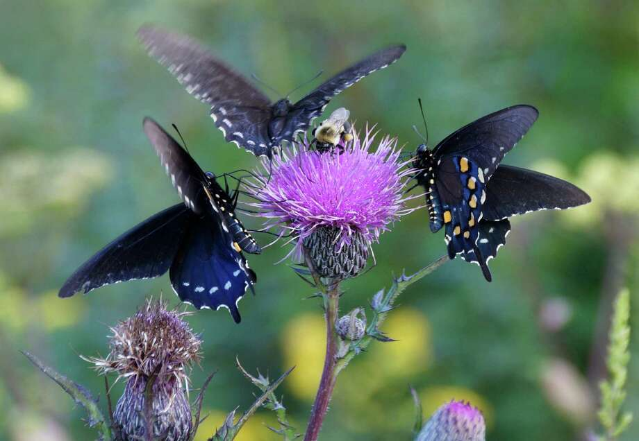 """The role garden plants play as a food source for insects will be addressed in the Jan. 14 """"Living Landscapes"""" talk by horticulturist Rick Darke at the Darien Library. Photo: Contributed Photo / Darien News"""