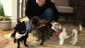 Will Trantham kneels by Jackson, left, a Shih Tzu, along with Darcy, center, and Sophie. Trantham and his wife adopted Jackson when they checked into Aloft Hotel in downtown Asheville, N.C., that is believed to be the only hotel in the United States where guests can adopt the front desk dog.