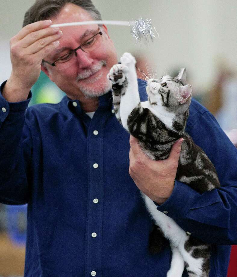 The Charity Cat Show, making a temporary move to the Humble Civic Center this year, gets underway Saturday. Photo: Johnny Hanson, Staff / © 2014  Houston Chronicle