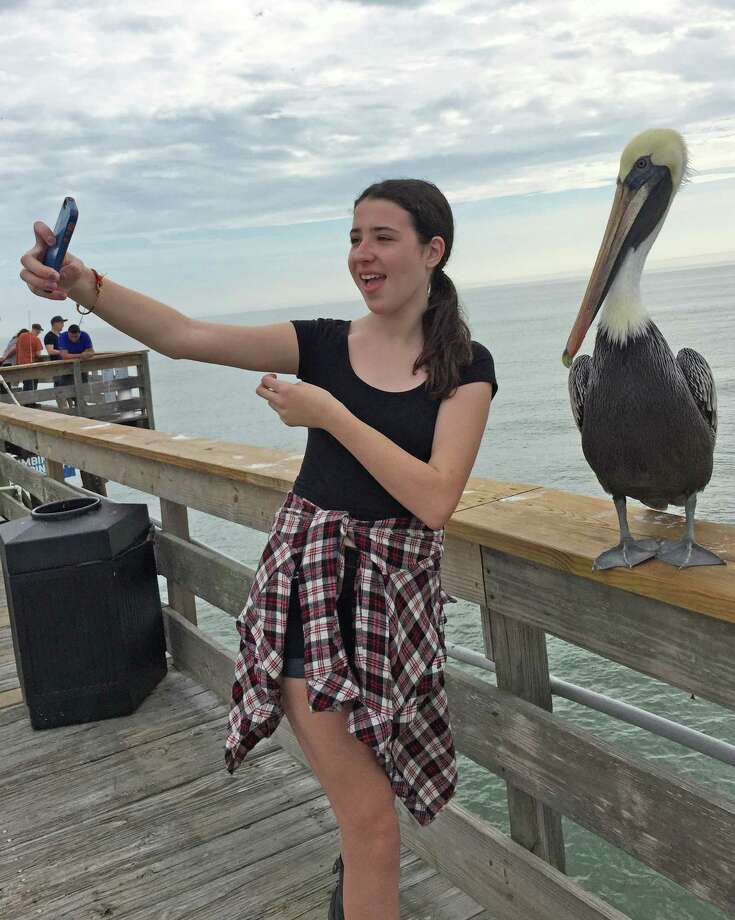 The author's daughter Julia was in Florda last week, where she snapped a selfie with a photogenic pelican. The average teenage girl takes and distributes about 20 selfies a day, according to the author's  admittedly small sample group. Photo: Fairfield Citizen/Genevieve Reilly / Fairfield Citizen