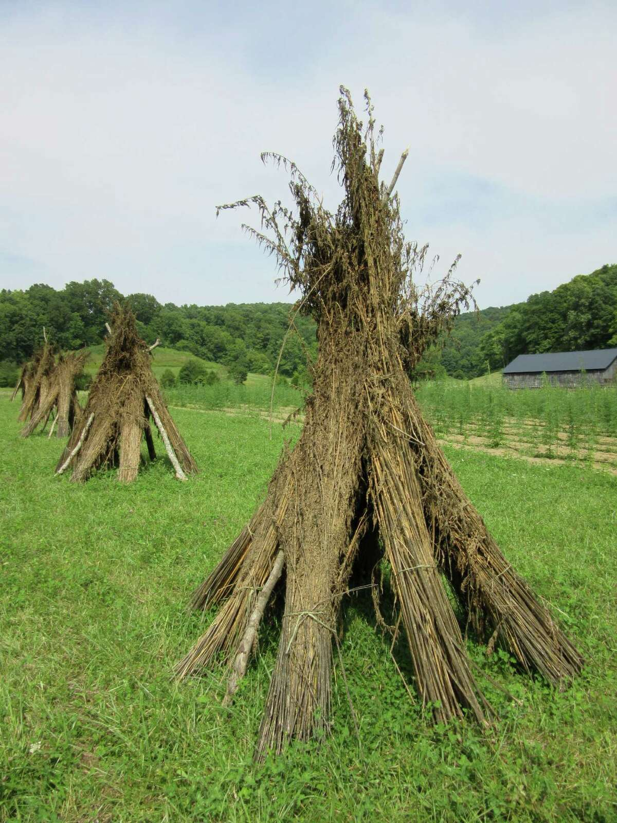 Harvest hemp waits in bundles prior to processing in Mount Vernon, Ky., in August.