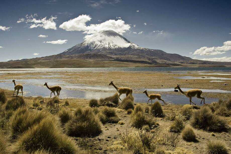 Above: Vicuñas run near Lake Chungara in Atacama, Chile. Chile scored highest among this year's list of nations for environmental protection.<252> Photo: Santiago Urquljo / Getty Images/Flickr Select / ONLINE_YES