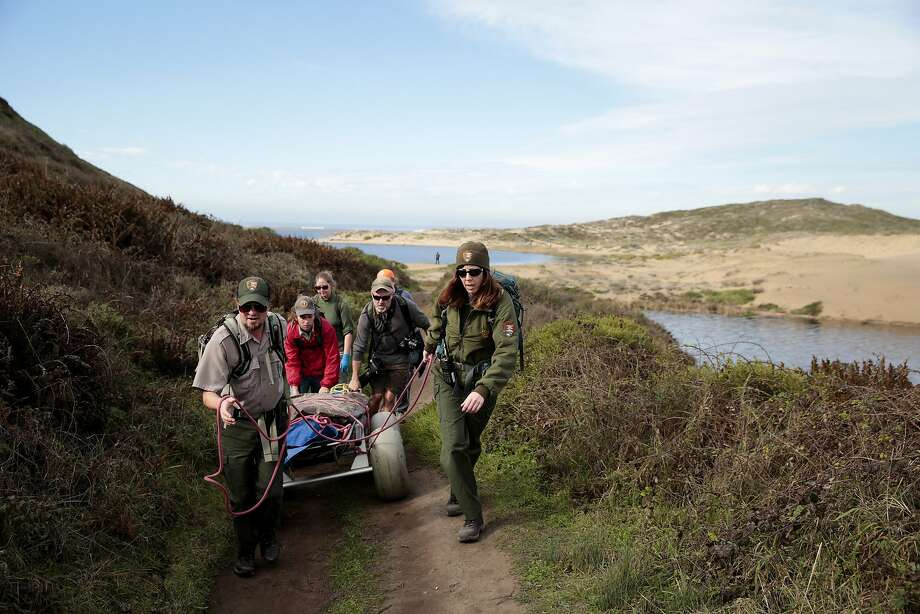 Members of the National Park Service, California Academy of Sciences, and The Marine Mammal Center attend to a dead male pygmy sperm whale that washed ashore Thursday afternoon on a beach in Abbotts Lagoon in the Point Reyes National Seashore near Inverness, Calif. on Jan. 9, 2015. Photo: Ramin Rahimian, Special To The Chronicle