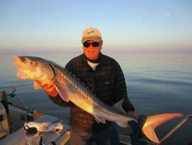 Jim Dunn displays a roughly 5-foot-long sturgeon caught recently in western San Pablo Bay.