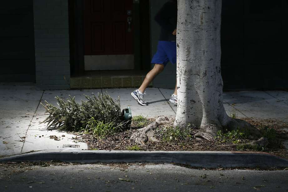 A discarded Christmas tree lies on the sidewalk in Noe Valley on Tuesday Jan. 06, 2015 in San Francisco, Calif. Photo: Mike Kepka, The Chronicle