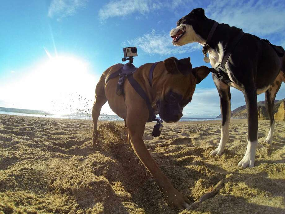 The GoPro Fetch dog harness has mounts for two GoPro HERO cameras to capture a dog's point of view. DCIM\105GOPRO Photo: GoPro / GoPro
