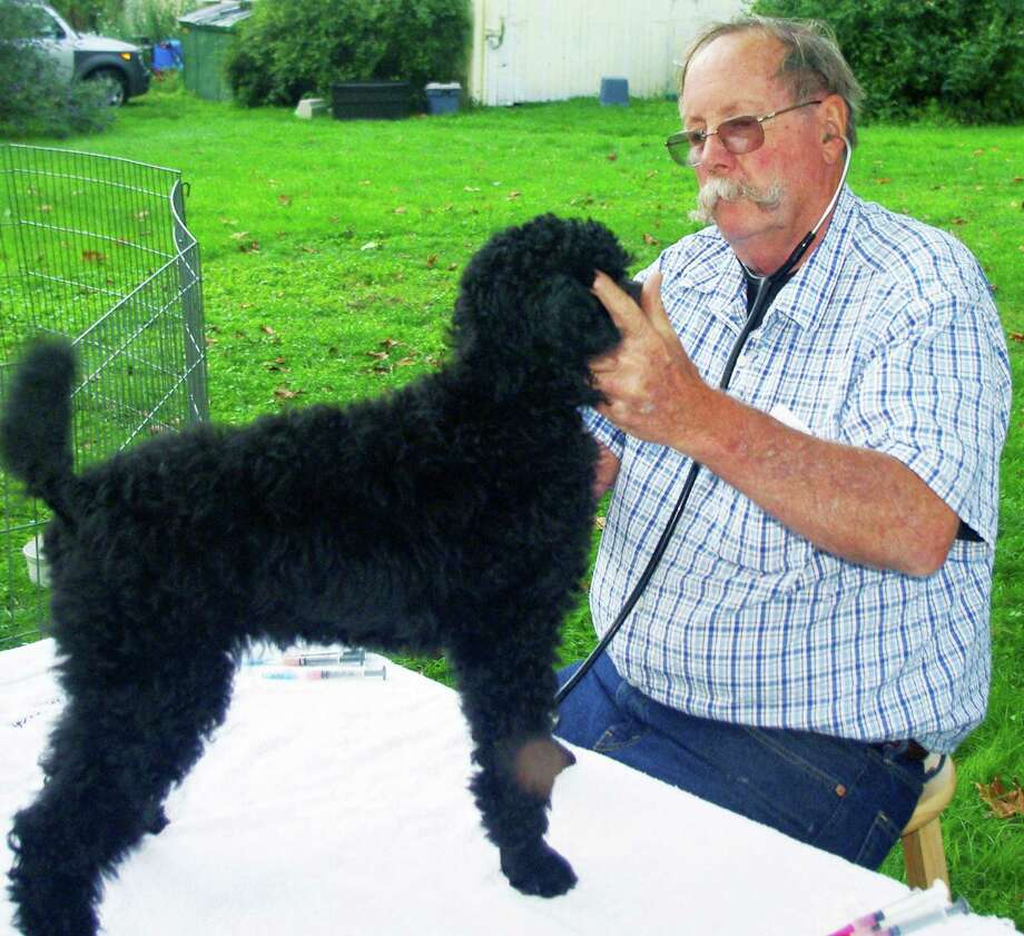 Dr. Paul Elwell's master touch with pets and area farm animals served him well during his long career as a veterinarian in Roxbury. Here he vaccinates a poodle owned by longtime client Sandra Cointreau of Roxbury. January 2015 Photo: Contributed Photo / The News-Times Contributed