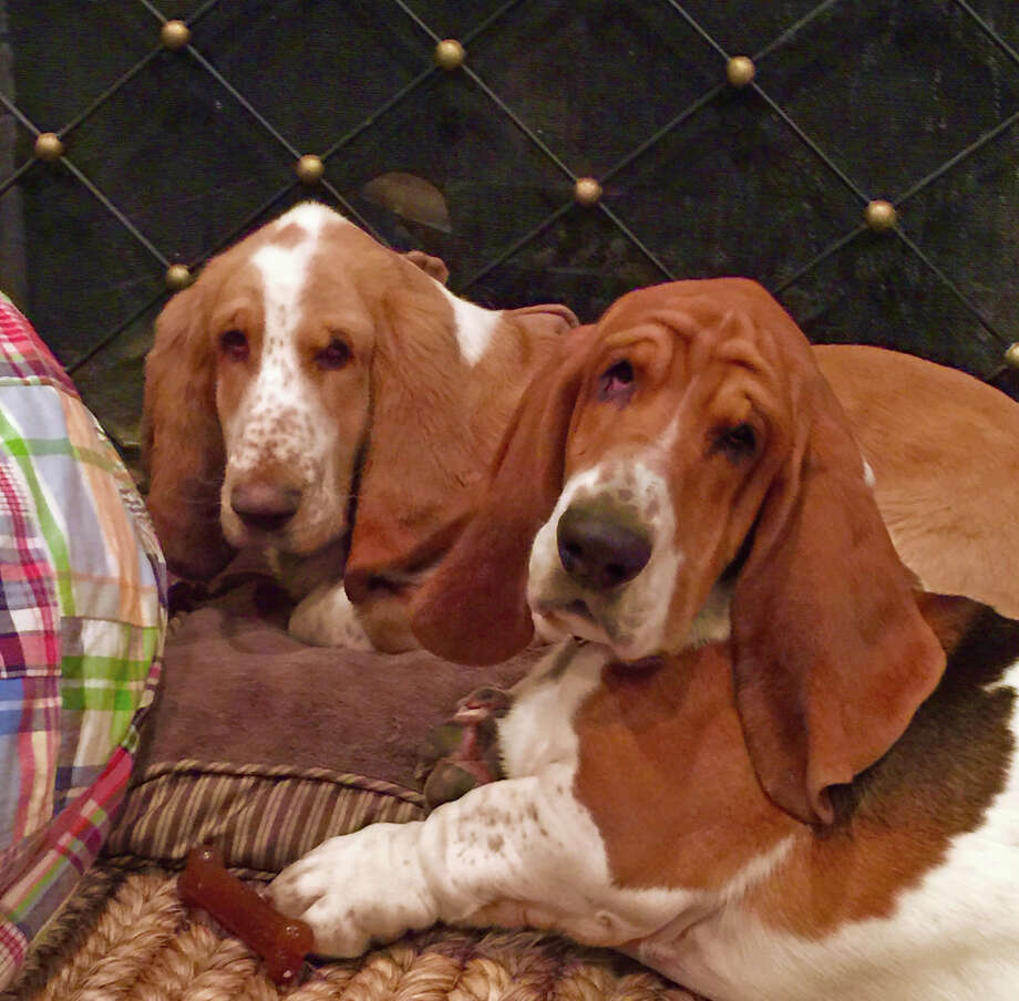 Dexter, left, and his younger cousin Linus disappeared from their Riverside home on Saturday morning, Jan. 10. Photo: Contributed Photo / Greenwich Time Contributed