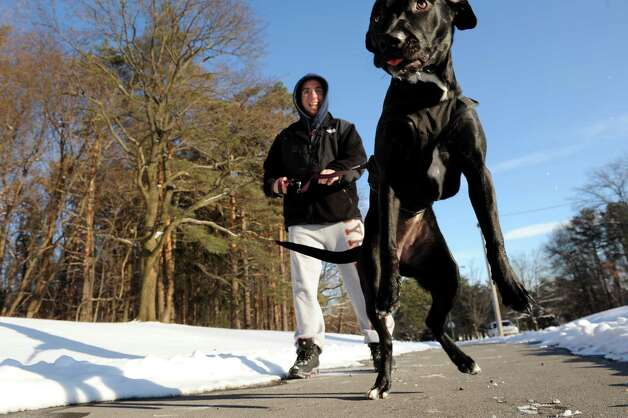 Rob Seoane of Schenectady laughs when his lab-mix, Oreo, gets frisky on their walk on Wednesday, Jan. 14, 2015, at Central Park in Schenectady, N.Y. (Cindy Schultz / Times Union) Photo: Cindy Schultz