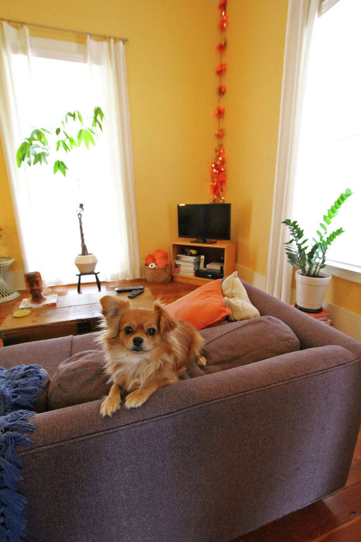 John Duvall?'s dog, Reba McEntire, makes herself at home on the living room sofa.