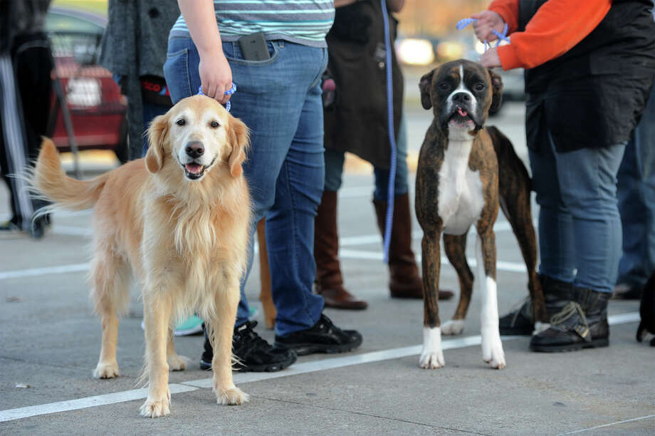 The staff of the Beaumont Petco and and several dogs were evacuated from the store for about an hour after a small trashcan fire set off the alarms. Photo taken Friday, January 16, 2015 Guiseppe Barranco/The Enterprise Photo: Guiseppe Barranco, Photo Editor