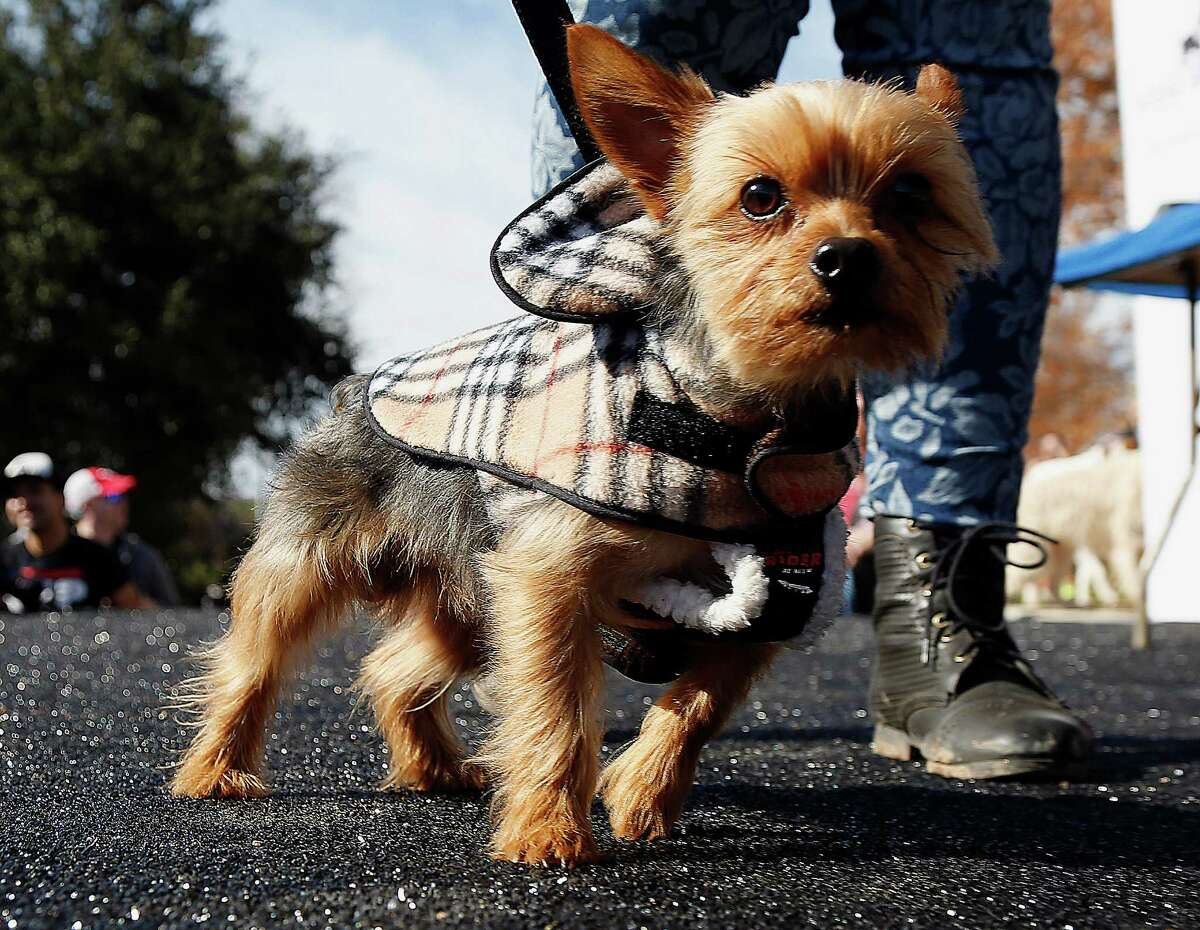 During the gran opening of Johnny Steele Dog Park Saturday, Jan. 17, 2015, in Houston.