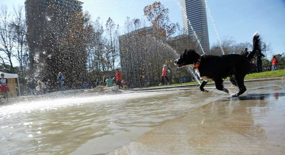 The Johnny Steele Dog Park off Allen Parkway opened on Saturday, Jan. 17, 2015 in Houston. Photo: James Nielsen, Houston Chronicle / © 2015  Houston Chronicle
