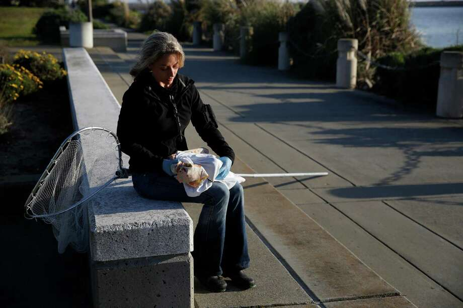 """Amber Transou with International Bird Rescue holds two holds two live birds, protects in pillow cases, affected by a mysterious substance  on Monday January 19, 2015 in Alameda, Calif. Recently a rash of birds deaths have been caused by substance. """"If we don't catch them they're dead,"""" said Transou. Photo: Mike Kepka / The Chronicle / ONLINE_YES"""