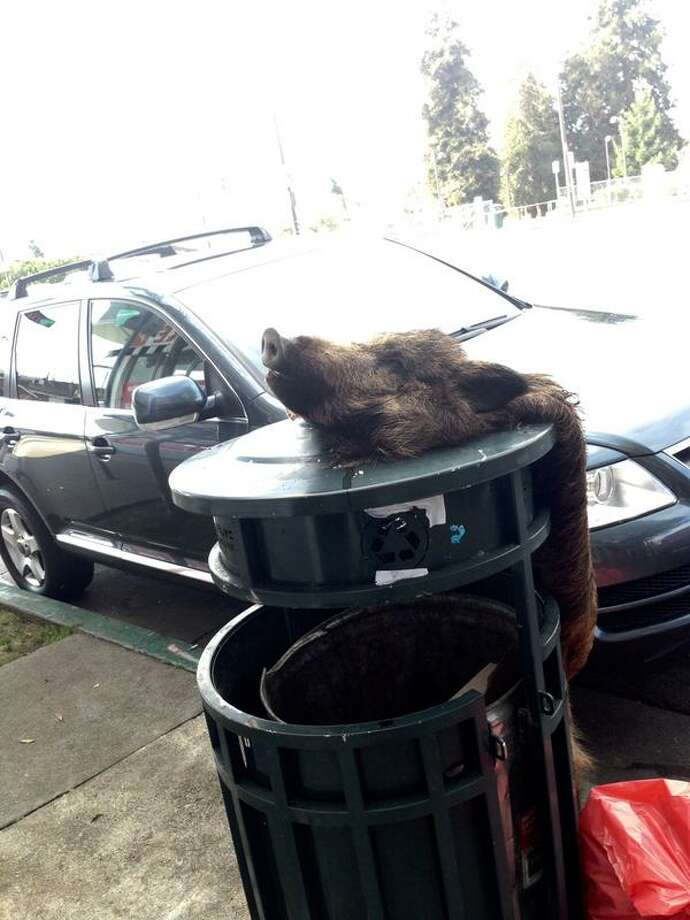 A skinned boar was found in Berkeley on the morning of Monday, Jan. 19, 2014, near a vegetarian restaurant on Adeline Street. Another such discovery was made the same morning on Shattuck Avenue near Herbivore, a downtown vegan restaurant. Photo: Courtesy / Anna Abramson / ONLINE_YES