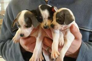 Up for adoption: Puppies left for dead in bag at park - Photo