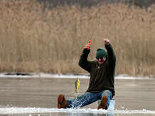 Alex Petrov, of Ansonia, pulls a yellow perch out of his hole while ice fishing at the ever popular Pink House Cove on the Housatonic River in Derby, Conn. on Wednesday Jan. 21, 2015.