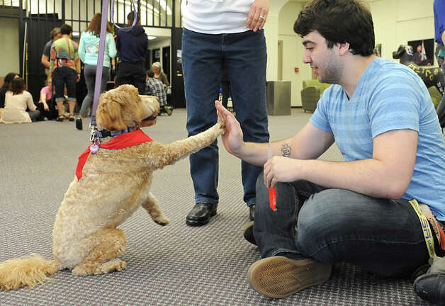 Therapy dog Ruby gives junior student Joe Alberts of Levittown, Long Island a high five at the University at Albany on Friday, May 9, 2014 in Albany, N.Y. Local therapy dogs were brought into the campus center to help students ease the stress of final exams. (Lori Van Buren / Times Union) Photo: Compiled By 518Life / 00026803A