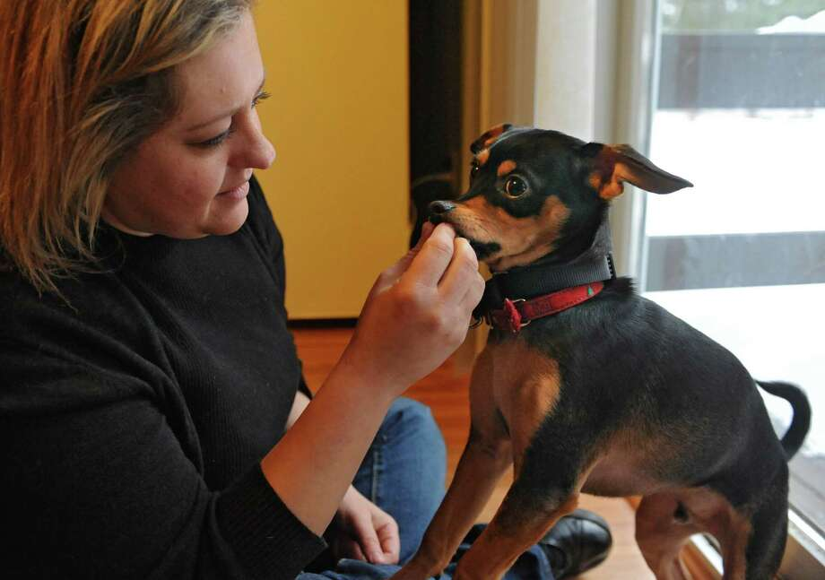 Michelle Maskaly gives Maddux, her 7-month-old mixed breed puppy, a treat at her home on Wednesday, Jan. 21, 2015 in Lake George, N.Y. The rescue dog will be staring in Animal Planet's 11th annual Puppy Bowl and is also featured on Animal Planet's Fantasy Draft Team. (Lori Van Buren / Times Union) Photo: Lori Van Buren / 00030297A