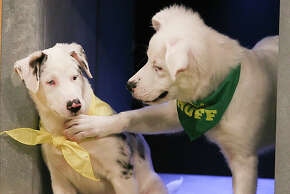 Teams Ruff and Fluff compete on the field during Puppy Bowl XI.