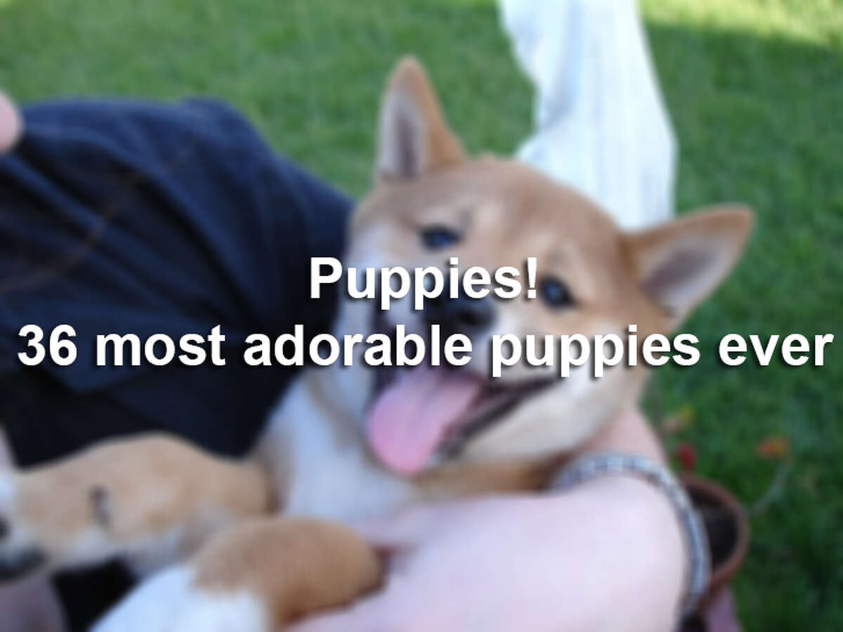 """Saturday, March 23 isNational Puppy Day! Intended to bring awareness to orphaned puppies in need of safe homes, this annual """"holiday"""" also gives us an excuse to look at pictures of adorable pups. We dug through ourPuppies Galleryto share our favorite reader-submitted photos."""
