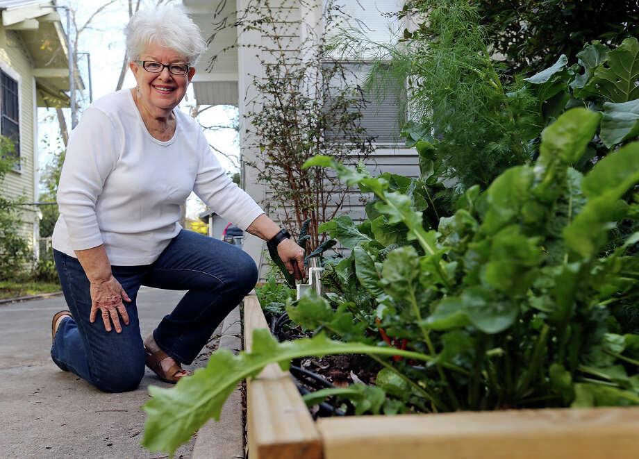 Marilyn Nyhus used the no-dig, no-till lasagna gardening method to create a rasied bed last fall on the side of her house in Highland Park. The layers of rich organic matter created rich soil in which cold-hardy herbs and vegetables such as cauliflower, broccoli, arugula and kale are thriving. Photo: Edward A. Ornelas /San Antonio Express-News / © 2015 San Antonio Express-News
