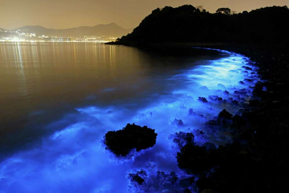 This long-exposure photo along the seashore in Hong Kong captures the glow that indicates a harmful algal bloom caused by Noctiluca scintillans. Also known as Sea Sparkle, the luminescence is triggered by the runoff of farm pollution. Photo: Kin Cheung, STF / AP