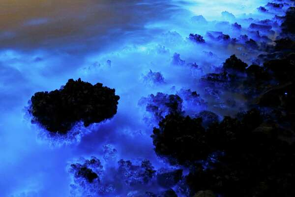 HOLD FOR STORY BY SETH BORENSTEIN This photo taken with a long exposure shows an algal bloom along the seashore in Hong Kong, Thursday, Jan. 22, 2015. (AP Photo/Kin Cheung)This Thursday, Jan. 22, 2015 photo made with a long exposure shows the glow from a Noctiluca scintillans algal bloom along the seashore in Hong Kong. The luminescence, also called Sea Sparkle, is triggered by farm pollution that can be devastating to marine life and local fisheries, according to University of Georgia oceanographer Samantha Joye. Noctiluca itself does not produce toxins like other similar organisms do. But its role as both prey and predator tends can eventually magnify the accumulation of toxins in the food chain, according to R. Eugene Turner at Louisiana State University. (AP Photo/Kin Cheung)