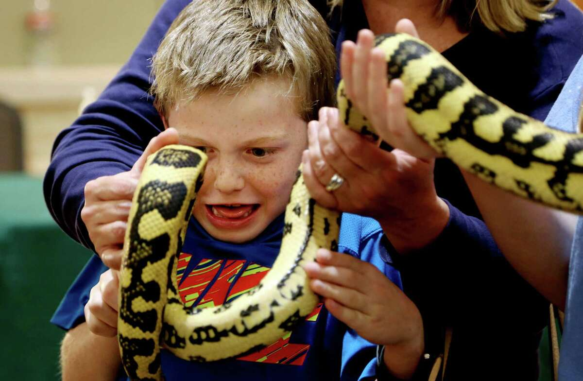 Caden Cherrington, 8, of Kingwood, shown with Riley Street's, 17, of Houston, new pet Jungle Jaguar Carpet Python bought from Rainbow Boa's, at the Houston Exotic Reptile and Pet Show hosted by the Texas Association of Reptile Keepers at the Lone Star Convention and Expo Center Sunday, Jan. 25, 2015, in Conroe, Texas.