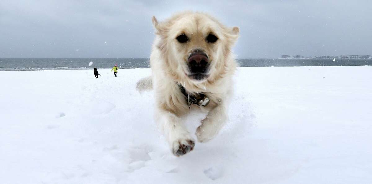 I DON'T CARE ABOUT SNOWSTORMS. I JUST WANT TO CHASE BALLS: Crystal dashes through the snow on Revere Beach in Revere, Mass., ahead of the blizzard that dumped more than two feet of additional snow in New England.