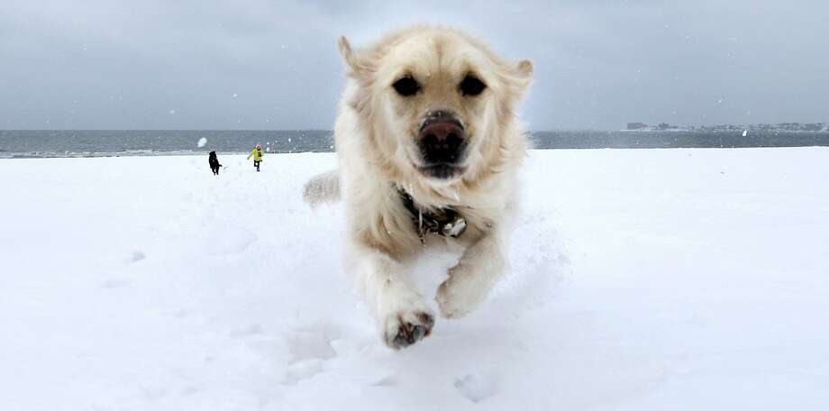 I DON'T CARE ABOUT SNOWSTORMS. I JUST WANT TO CHASE BALLS:Crystal dashes through the snow on Revere Beach in Revere, Mass., ahead of the blizzard that dumped more than two feet of additional snow in New England. Photo: Charles Krupa, Associated Press