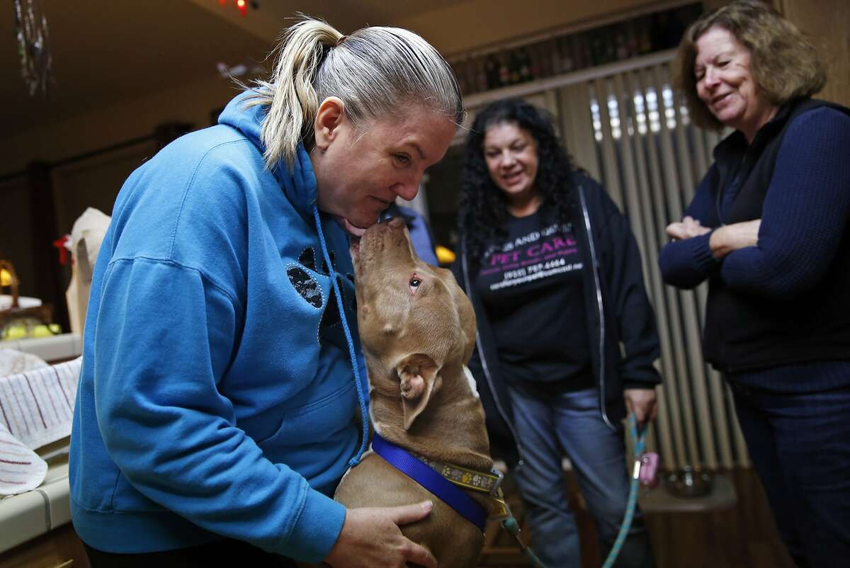 Beth Bennett (left) is greeted by Lady, a rescued pit bull, at a home in Discovery Bay, Calif. on Sunday, January 25, 2015. Looking on is dog rescuer Diane Asher (center) and dog trainer Debbie DeMello. Bennett and fellow dog rescuer, Stefani Buzzard, were starting a trip to drop off Lady and another rescue dog at new homes in Kentucky and Tennessee.