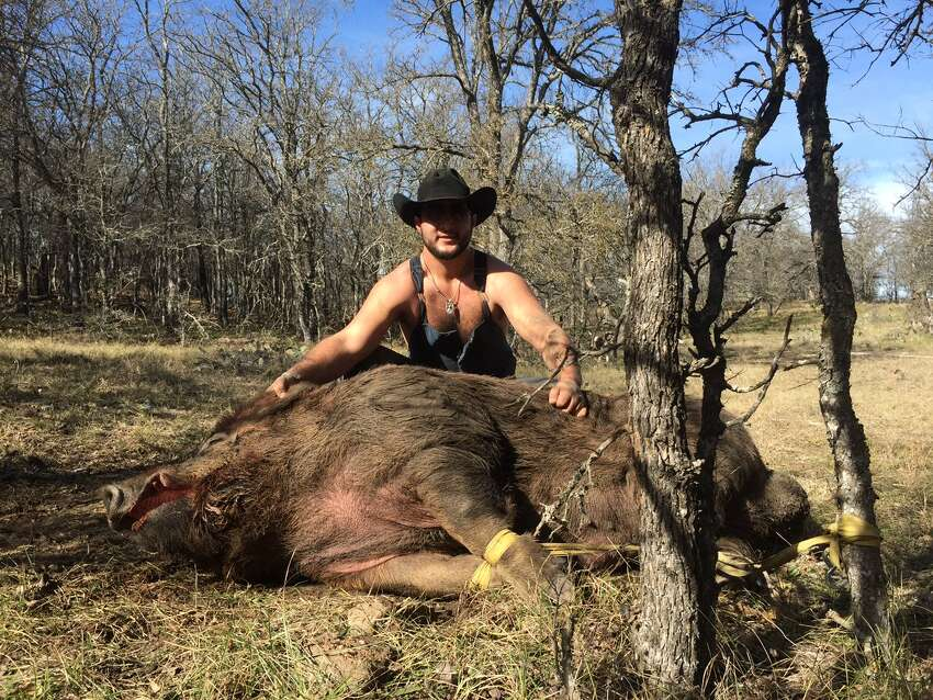 Hunters Blaine Garcia and Wyatt Walton caught a 790-pound boar on Friday, Jan. on a ranch Jan. 16, 2015, on a ranch in De Leon, a town about 35 minutes west of Stephenville, Texas. Garcia and Walton are debating the fate of the male hog, but the hog is getting around-the-clock-care.