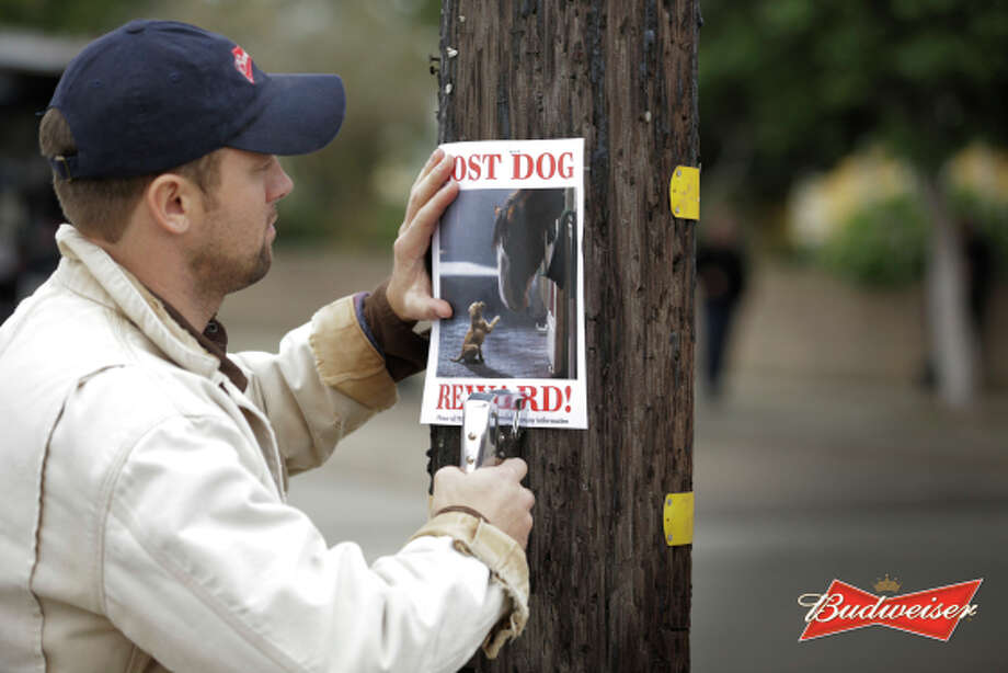 Actor Don Jeanes, 34, who grew up in Humble, on Sunday will make a third Super Bowl commercial appearance as a kind-hearted Clydesdale trainer.  Lost Dog,  a follow-up to last year s  Puppy Love  spot for InBev Anheuser-Busch s Budweiser brand, was released Wednesday on YouTube.