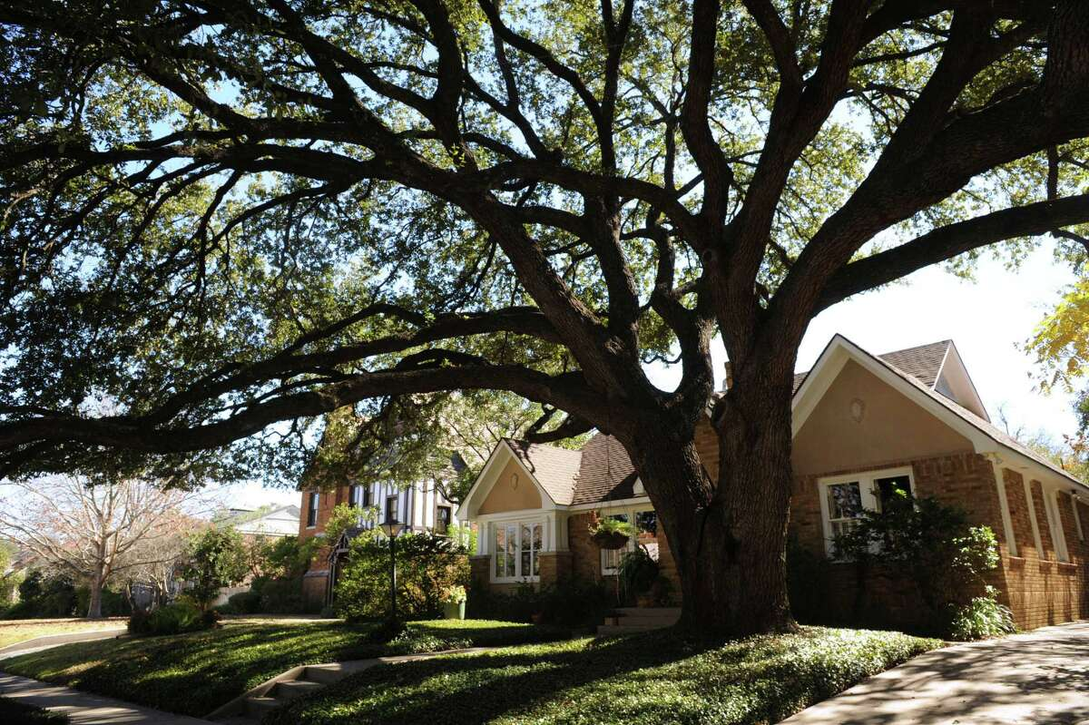 A sprawling live oak drew Jean Brady's attention to a brick cottage. She bought the house and named the tree Rosie.