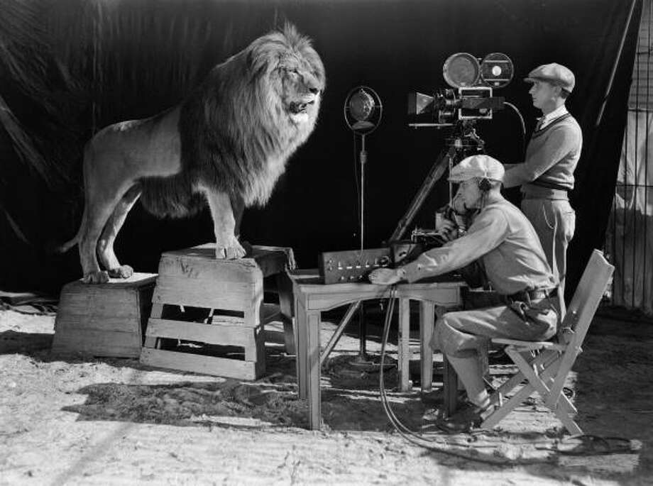 Name: Jackie; Leo the LionJob: MGM mascotCompensation: 15 pound of meat per day (1928-1956)Source: Lapham's Quarterly Photo: John Kobal Foundation, Courtesy / Moviepix