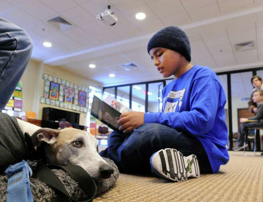"At right, Michael Morales, 9, of Greenwich, reads a book about BMX biking to Brasil, a Whippet belonging to Don Smith of Darien during the ""Read to a Dog"" program at the Byram Shubert Library, Greenwich, Conn., Wednesday, Jan. 28, 2015. The program is part of the national program, R.E.A.D. (Reading Education Assistance Dogs), that offers children and teens the chance to improve their reading and communication skills by reading aloud to a therapy dog. The program was started at the Byram Shubert four years ago by Miguel Garcia-Colon, Byram Shubert Library manager with help from Don Smith, a Darien resident, who is involved with R.E.A.D. Garcia-Colon said it is one of the most popular programs at the library averaging 30 children per session and takes place every Wednesday between 3 - 4 p.m. when readers can pick a book and select a therapy dog (with handler) to read to. The program R.E.A.D. was started in 1999 in Salt Lake City and now has 3,000 therapy teams around the world said Don Smith, who along with his Whippet, Brasil, listens as children read aloud their favorite books. Photo: Bob Luckey / Greenwich Time"